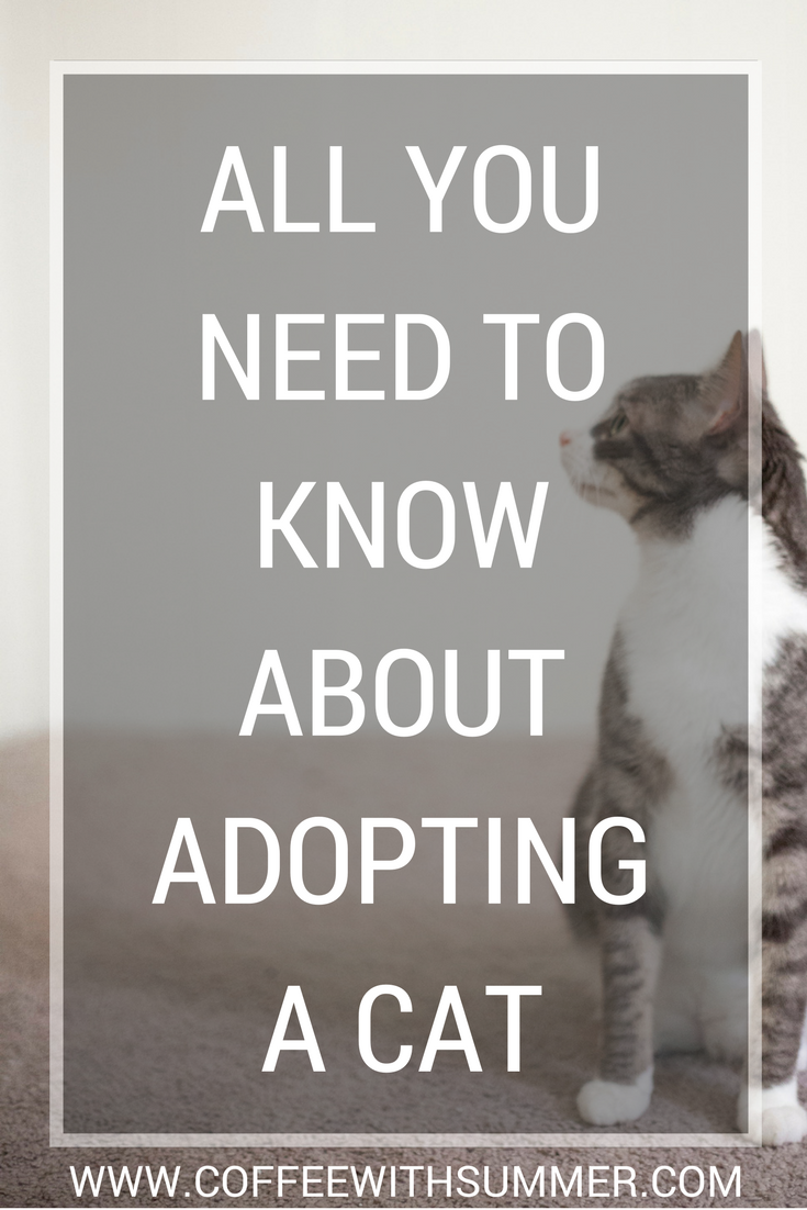 All You Need To Know About Adopting A Cat | Coffee With Summer