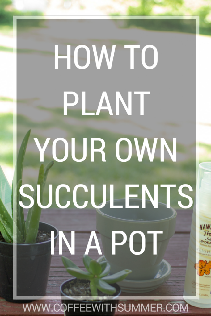 How To Plant Succulents In A Pot